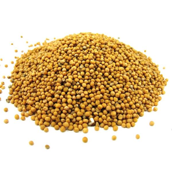 Горчичное семя белое мешок 30 кг.